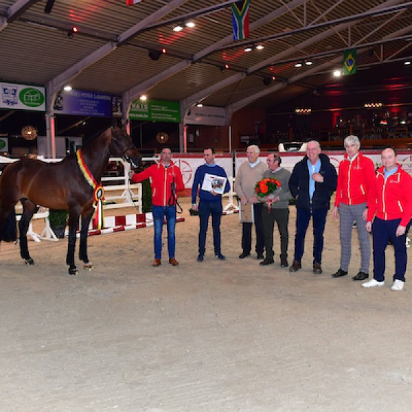 BWP stallion approval, auction & stallion competition